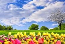 صورة مقال – كيف تستقبل فصل الربيع بحيوية متجددة ؟