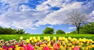مقال - كيف تستقبل فصل الربيع بحيوية متجددة ؟