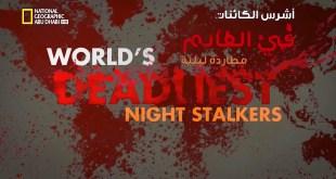 أشرس الكائنات في العالم HD : مطاردة ليلية