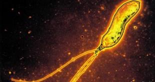 مقال - نصائح ذهبية للوقاية من أمراض السرطان