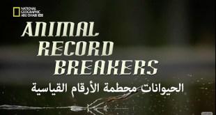وجهات برية HD : الحيوانات محطمة الأرقام