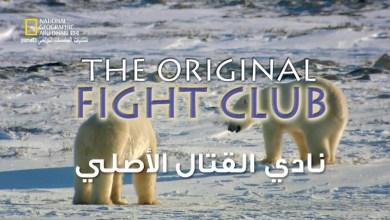 وجهات برية HD : نادي القتال الأصلي
