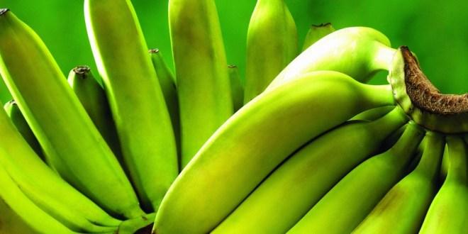 مقال - 8 فوائد ذهبية للموز الأخضر... فاحرص على تناوله يوميا