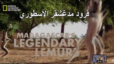 وجهات برية HD : قرد مدغشقر الأسطوري