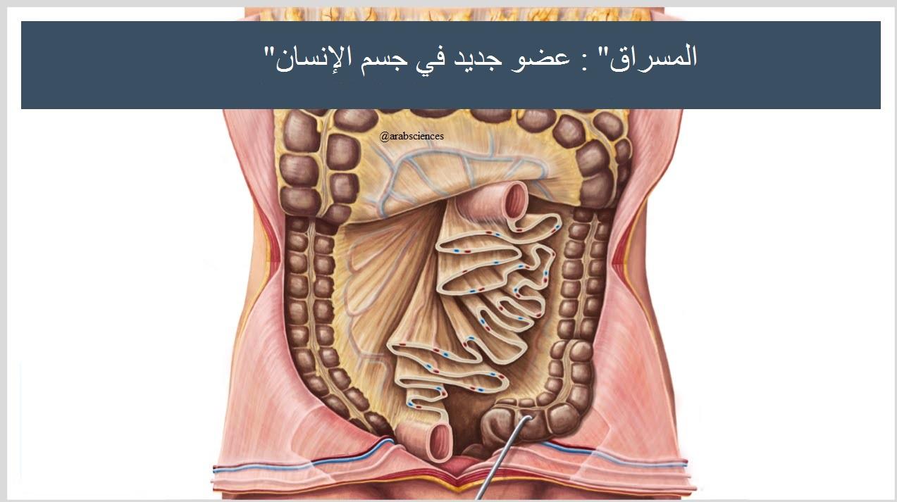 """مقال - إكتشاف عضو جديد في جسم الإنسان """"المسراق"""" - موقع علوم العرب"""