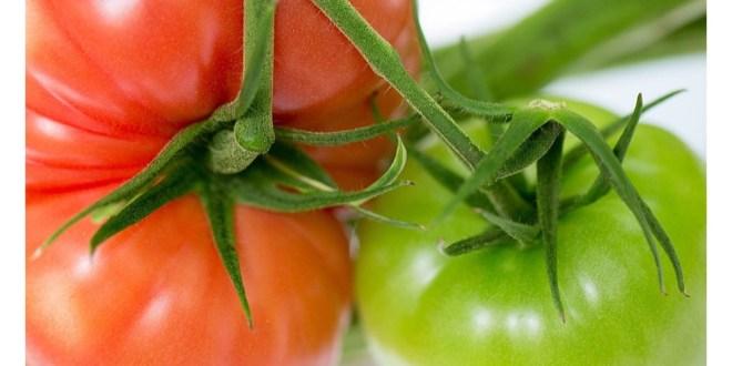 مقتطف - هكذا تزرع الطماطم وسط الصحراء!!