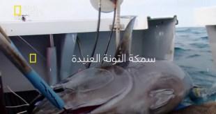 سمكة التونة العنيدة HD : الموسم 5 – ح7 : من يحصل على السمك