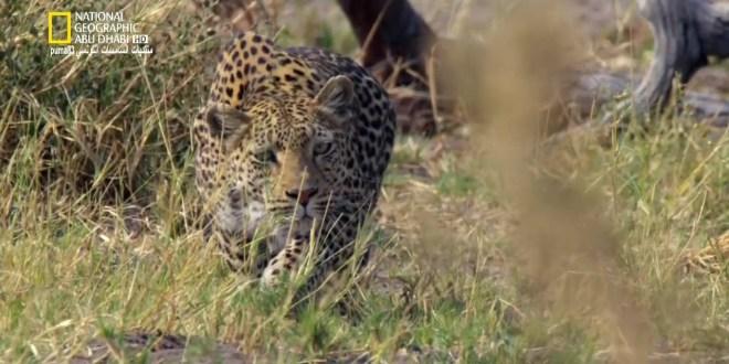 المملكة المتوحشة ح1: صخرة الفهد
