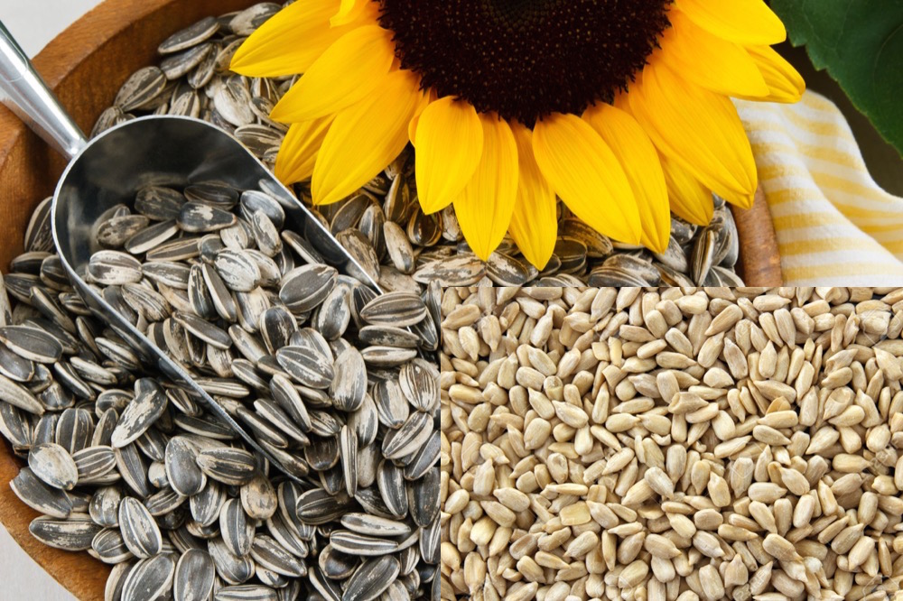 مقال - 6 فوائد صحية لبذور دوار الشمس ستجعلك تواضب على تناوله
