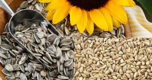 مقال – 6 فوائد صحية لبذور دوار الشمس ستجعلك تواضب على تناوله