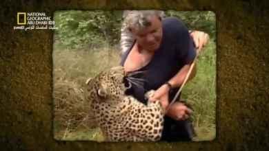 بالجرم المشهود : صراع النمور