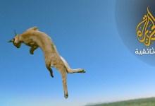 حياة في الجو - 1 حيوانات تتحدى الجاذبية