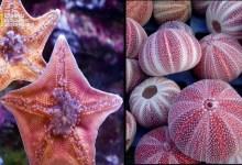 أشرس الكائنات في العالم : حيوانات مائية قاتلة