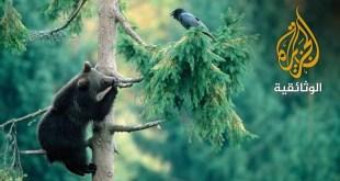 غابات بافاريا الغامضة