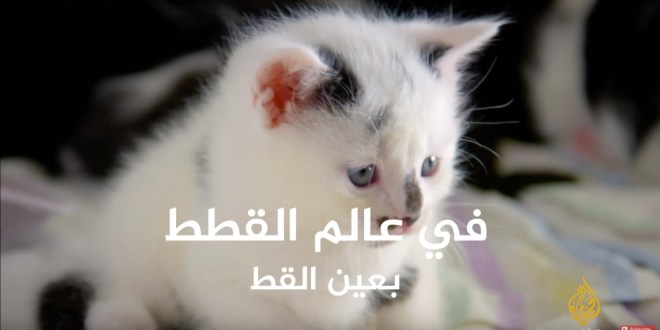 في عالم القطط 1 - بعين القط