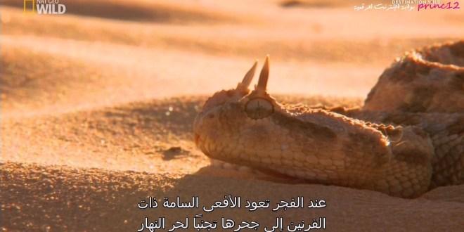 مترجم - وجهات برية : في الصحراء الكبرى مصر وسيناء