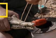 صورة في البراري مع جاك راندال : صراع التماسيح