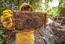 صورة لماذا عسل المانوكا الأغلى في العالم؟