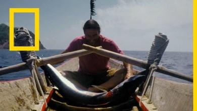 أساليب البقاء : النجاة في الجزر النائية