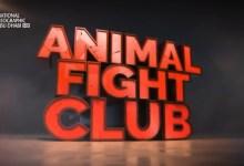 ليلة قتال الحيوانات الحلقة 1
