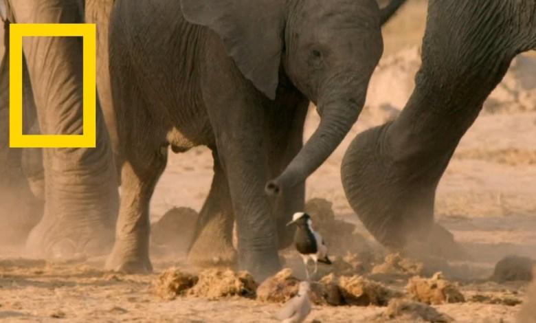 أشرس كائنات أفريقيا : أسياد الرعب