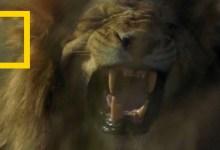 المملكة المتوحشة : فجر الظلمة
