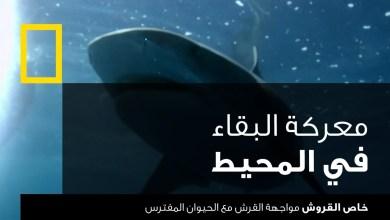 خاص القروش : مواجهة القرش مع الحيوان المفترس
