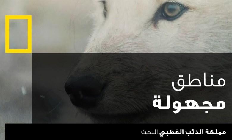 مملكة الذئب القطبي : البحث