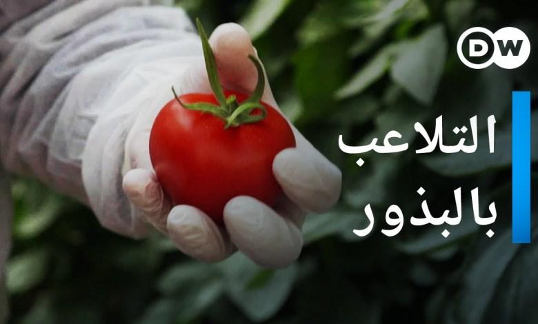 كارتل البذور - الفواكه و الخضروات المعدلة وراثياً