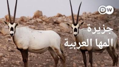 جزيرة الظباء البيضاء - جنة أبو ظبي للحياة البرية