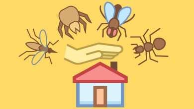 طريقة التخلص من حشرات المنزل بسهولة