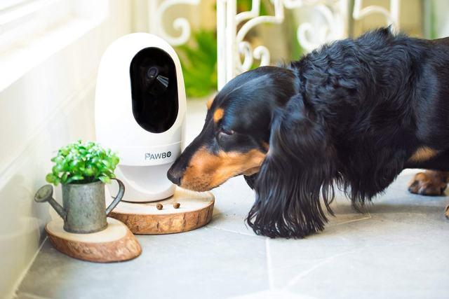 تقنيات المنازل الذكية للحيوانات الأليفة