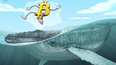 صورة أحد الحيتان ينقل ١,٣ مليار دولار في بيتكوين … والسؤال هو لماذا؟