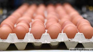 صورة منتجو البيض في المغرب يخسرون 36 مليون دولار بسبب كورونا
