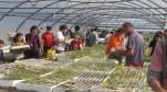 Reparto de plantero (1)