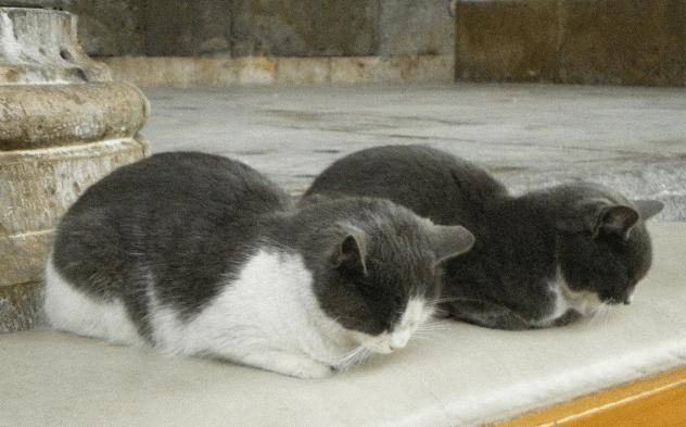 鶴岡一成、人的補償で阪神へ(藤井秀悟ブログ)