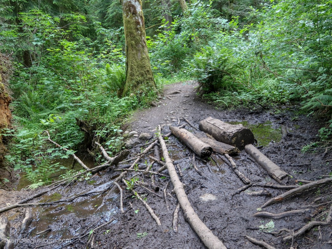Crossing the Margaret Way Trail's one muddy patch