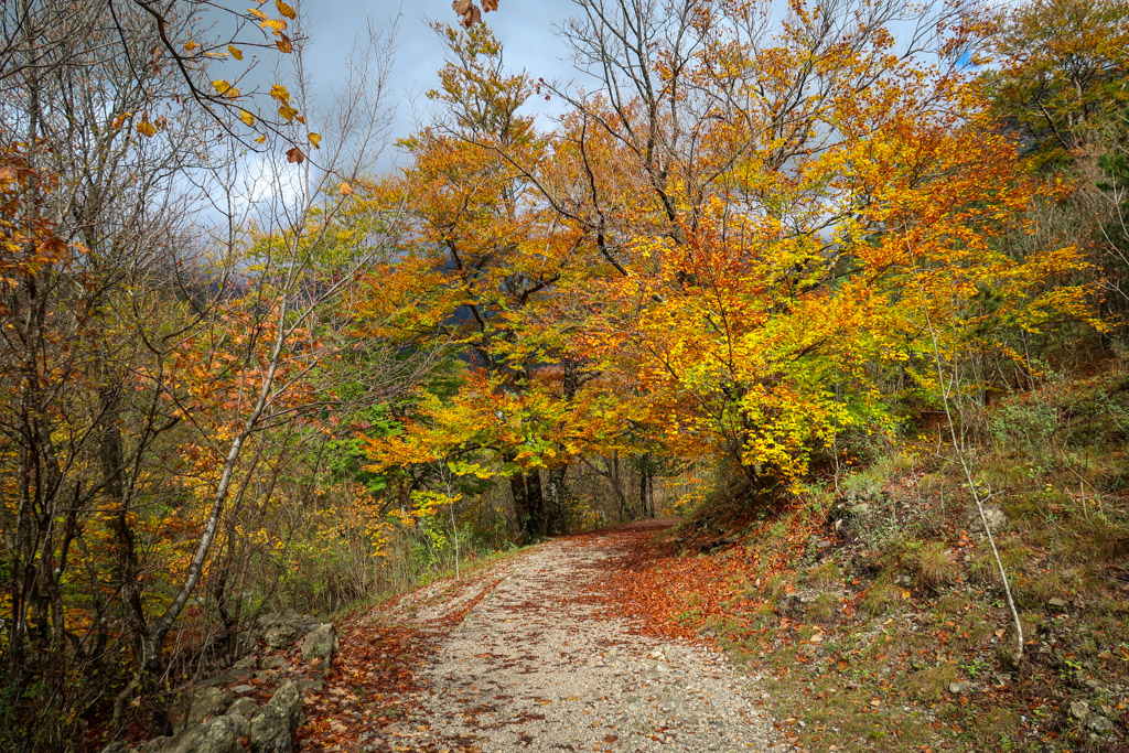 Trees bright with fall foliage in reds, yellows and oranges line the hiking trail