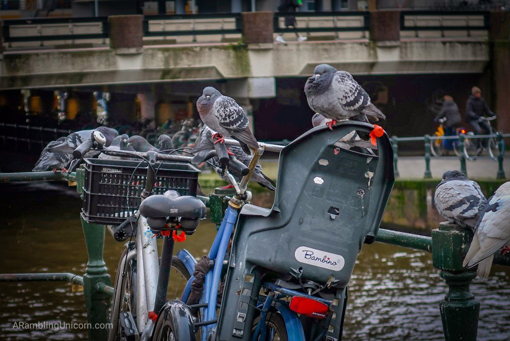 Amsterdam Blog: This is what happens to your bike when you're not looking.