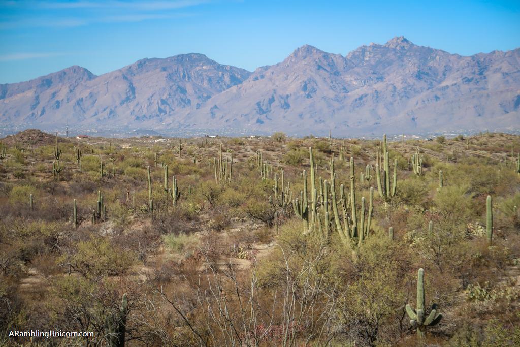 Saguaro Cactus Forest in Saguaro National Park East