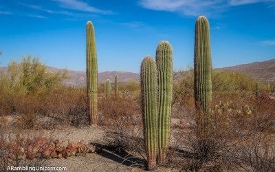 Christmas in Tucson – Pandemic Style