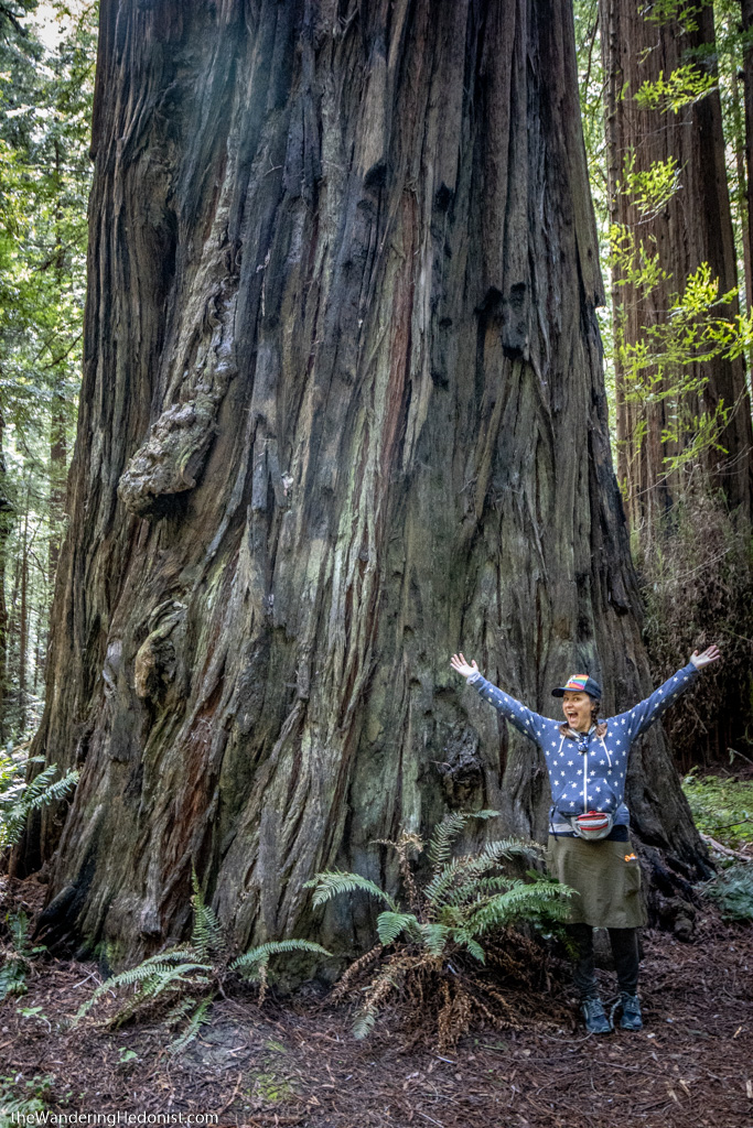 Photo of the author standing at the base of a giant redwood tree
