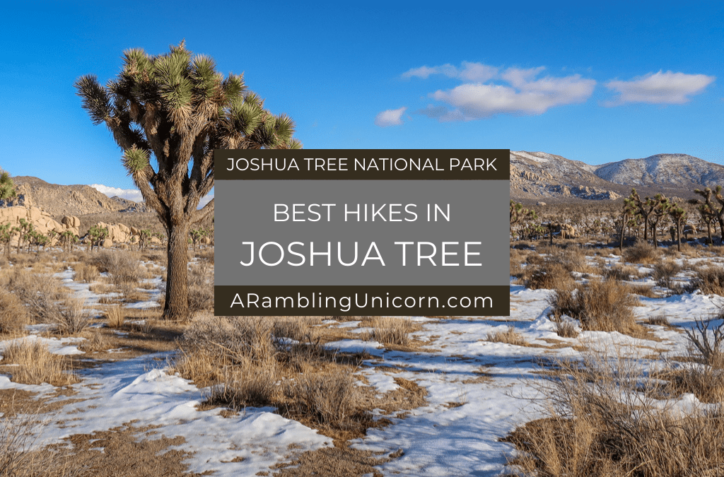 Best Hikes in Joshua Tree: The Ultimate Hiking Guide