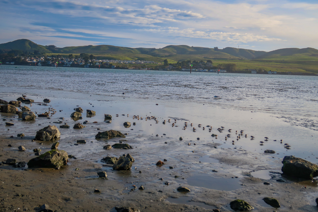 Bodega bay looking inland with green hills in the distance and small birds in water
