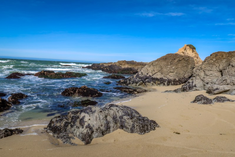 Sandy beach lined with rugged granite rocks at Bodega Head