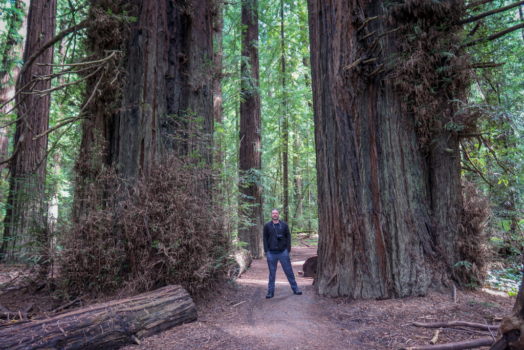Daniel is dwarfed by two giant redwood trees at Franklin K. Lane grove, near the beginning of the Avenue of the Giants auto tour