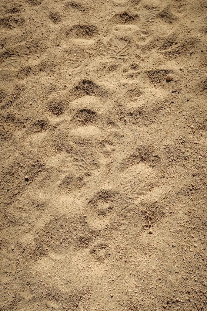 Sandy trail with human footprints and coyote footprints