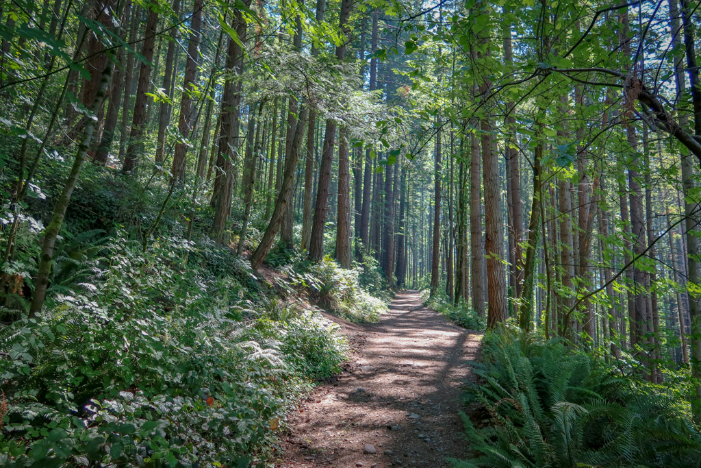 A hiking trail lined with ferns leads through a moody forest with sunlight streaming through the trees above