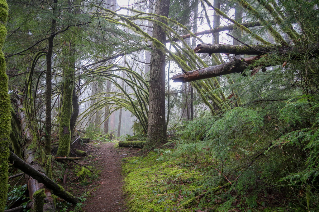 A hiking trail leads into the a green forest that is shrouded in fog
