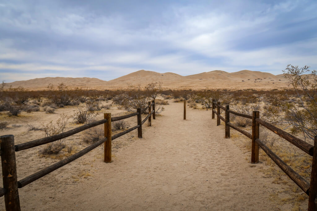 beginning of the Kelso Dunes Trail is lined with some wooden fences with the sand dunes rising in the background